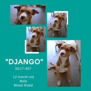No photo for Django  Dg17 457