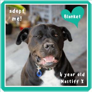 No photo for Blanket ~ Mastiff X
