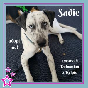 No photo for Sadie ~ Dalmatian X Kelpie