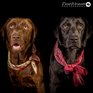 No photo for Lilly And Suzie ~ Labradors
