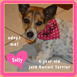 No photo for Sally ~ Jack Russell Terrier