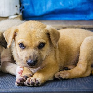 No photo for Genesis ~ Sweet Koolie X Puppy