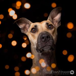 No photo for Luna ~ Greyhound X