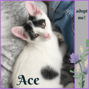 No photo for Ace ~ Kitten