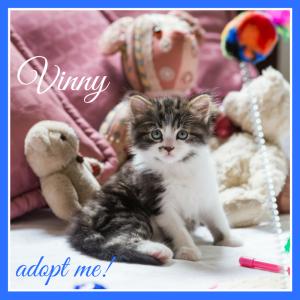 No photo for Vinny ~ Kitten