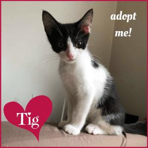 No photo for Tig ~ Kitten