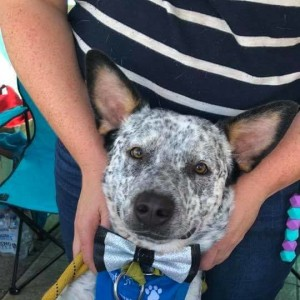 No photo for Ralph ~ 6 Month Old Cattle Dog