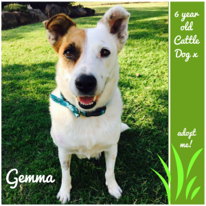 No photo for Gemma ~ 6 Year Old Cattle Dog X