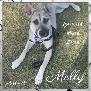 No photo for Molly ~ 1 Year Old Mixed Breed