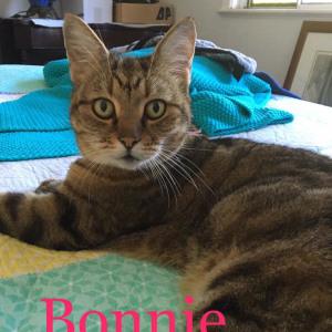 No photo for Bonnie