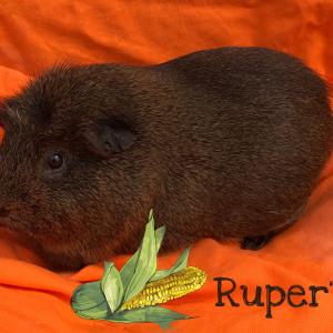 No photo for Rupert