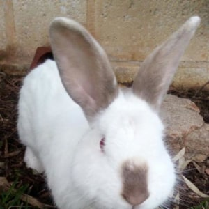 No photo for Joe Bunny * On Trial With My New Family *
