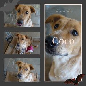 No photo for Coco  Dg18 411