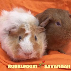 No photo for Bubblegum & Savannah