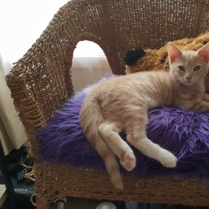 No photo for Benji (Located In Ringwood East)