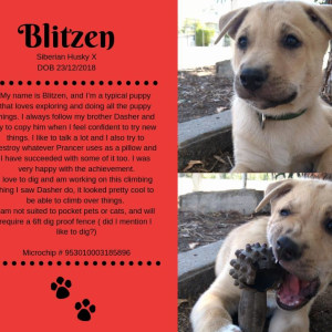 No photo for Blitzen