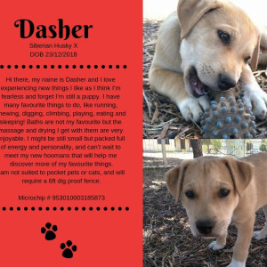 No photo for Dasher