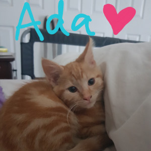 No photo for Ada