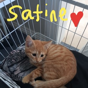No photo for Satine