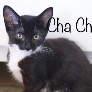 No photo for Cha Cha