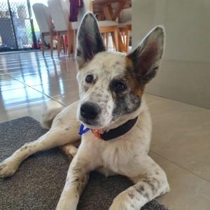 Dog Rescue Newcastle | Medium Dogs & Puppies