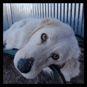No photo for Lilly (Companion Dog)