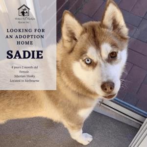 No photo for Sadie