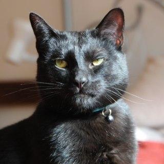Mr Biggles The Utter Bastard Of A Cat