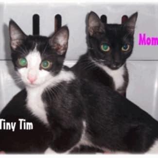 Momi & Tim