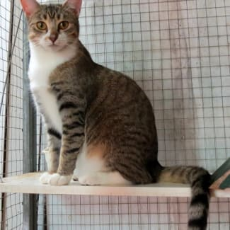 """""""Betsy"""" - Purrfect Match Cat Adoptions"""
