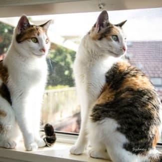 Miki and Niki