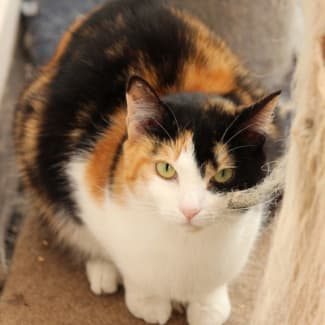 Patricia **2nd Chance Cat Rescue**