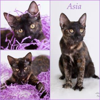 Asia *$35