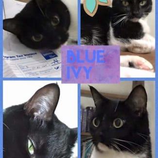 Blue Ivy ($35)