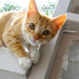 Ginny ~ (babyCat)