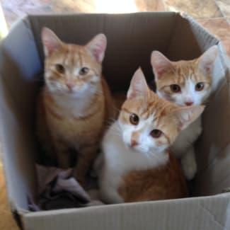 merrick,Elliott&Merlin