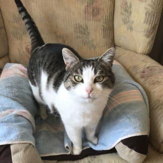 Pound Cats | Mackenzie The Talking Cat