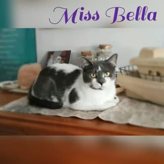 Miss Bella