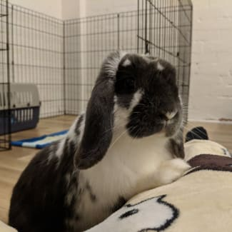 Marble- On adoption trial
