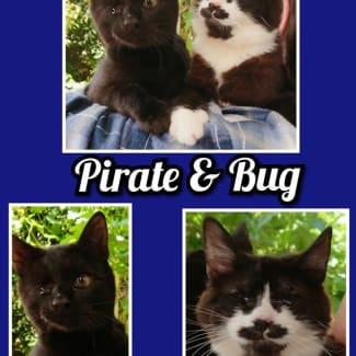 Bug & Pirate