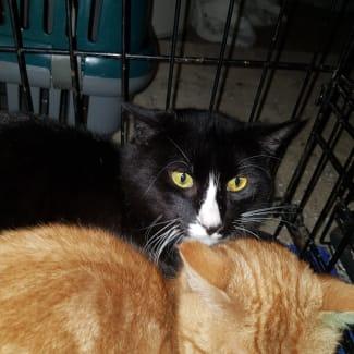 Tuxedo~Rainbow Cat Rescue~