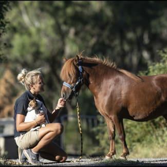 Horse Shepherd Kylie