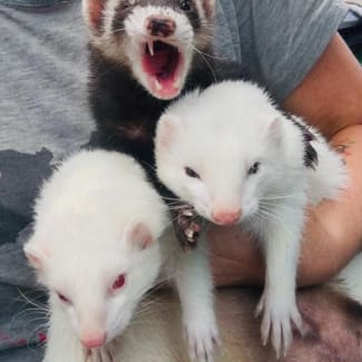Elwood, Jake & Rebel