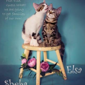 Sheba and Elsa