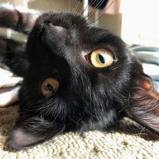 Danny DeVito **2nd Chance Cat Rescue**