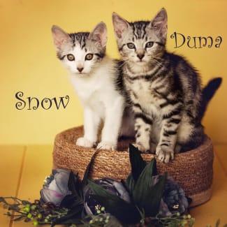 Snow and Duma