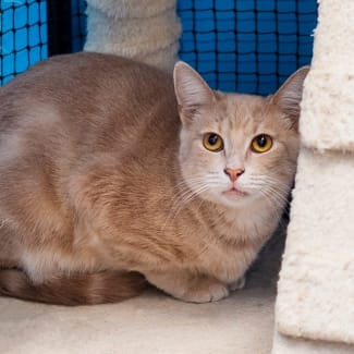 Tony **2nd Chance Cat Rescue**