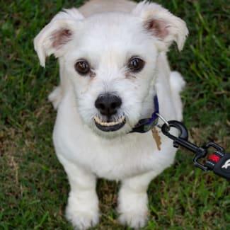 Pluto Pup