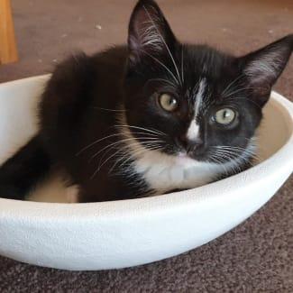 Dot ^^Dandy Cat Rescue^^