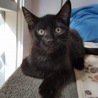 Kenny ^^Dandy Cat Rescue^^